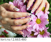 Купить «Женские руки с  маникюром и цветы хризантемы», фото № 2663480, снято 28 июня 2011 г. (c) Татьяна Белова / Фотобанк Лори