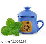 Ветка мяты и синяя чашка для заварки. Стоковое фото, фотограф Шикунец Татьяна / Фотобанк Лори