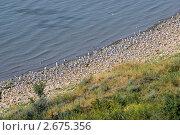 Купить «Птичий базар на берегу Азовского моря», фото № 2675356, снято 1 июля 2011 г. (c) Борис Панасюк / Фотобанк Лори
