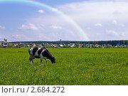 Купить «Корова на лугу под радугой», фото № 2684272, снято 22 мая 2011 г. (c) Ольга Аристова / Фотобанк Лори