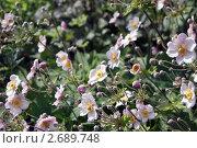 Цветы. Стоковое фото, фотограф Елена Рубанова / Фотобанк Лори
