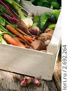 Купить «Урожай овощей в ящике в огороде», фото № 2692264, снято 18 июля 2011 г. (c) Светлана Зарецкая / Фотобанк Лори