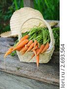 Купить «Морковь в корзинке и соломенная шляпа на скамейке в саду», фото № 2693564, снято 18 июля 2011 г. (c) Светлана Зарецкая / Фотобанк Лори