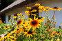Цветы на клумбе перед входом в украинскую хату, Киев, Украина, фото № 2699876, снято 16 июля 2011 г. (c) Николай Винокуров / Фотобанк Лори
