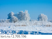 Зимний день. Стоковое фото, фотограф ElenArt / Фотобанк Лори