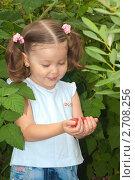 Маленькая девочка собирает ягоды малины в саду. Стоковое фото, фотограф Антон Железняков / Фотобанк Лори