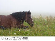 Лошадь в тумане. Стоковое фото, фотограф Михеев Павел / Фотобанк Лори