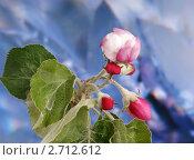 Купить «Яблоневый цвет», фото № 2712612, снято 18 мая 2011 г. (c) Владимир Журавлев / Фотобанк Лори