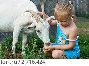 Девочка играет с козой. Стоковое фото, фотограф LenaLeonovich / Фотобанк Лори