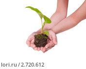 Зеленое растение в женских руках. Стоковое фото, фотограф Валерия Лузина / Фотобанк Лори