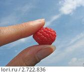 Купить «Ягода малины в женских пальцах на фоне голубого неба», фото № 2722836, снято 16 июля 2011 г. (c) Светлана Ильева (Иванова) / Фотобанк Лори