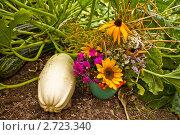 Купить «Букет полевых цветов  рядом с кабачками», фото № 2723340, снято 14 августа 2011 г. (c) Ольга Аристова / Фотобанк Лори