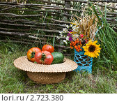 Купить «Букет полевых цветов и соломенная шляпа с овощами», фото № 2723380, снято 14 августа 2011 г. (c) Ольга Аристова / Фотобанк Лори