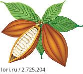 Какао бобы и листья. Стоковая иллюстрация, иллюстратор Шикунец Татьяна / Фотобанк Лори