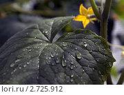 Утренняя роса. Стоковое фото, фотограф Дмитрий Жеглов / Фотобанк Лори