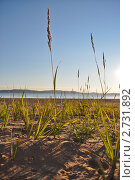 Трава на берегу моря. Стоковое фото, фотограф Марина Зимина / Фотобанк Лори