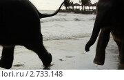 Бегущие слоны. Стоковое видео, видеограф Павел Меняйло / Фотобанк Лори