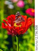 Бабочка на цветке. Стоковое фото, фотограф Евгений Липский / Фотобанк Лори