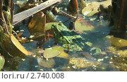 Купить «Зеленая лягушка в пруду», видеоролик № 2740008, снято 25 июля 2011 г. (c) Андрей Некрасов / Фотобанк Лори