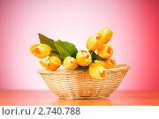 Купить «Букет искусственных тюльпанов в корзине», фото № 2740788, снято 11 июля 2010 г. (c) Elnur / Фотобанк Лори