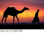 Купить «Мужчина ведёт верблюда на фоне заката», фото № 2744708, снято 26 апреля 2019 г. (c) Дмитрий Калиновский / Фотобанк Лори