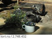 Стакан ягод голубики,и ветки голубики на фоне костра с чайником. Стоковое фото, фотограф Геннадий чупругин / Фотобанк Лори