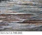 Поверхность дерева. Стоковая иллюстрация, иллюстратор Татьяна Глущенко / Фотобанк Лори