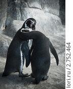 Пингвины. Стоковое фото, фотограф Яна Матвеева / Фотобанк Лори