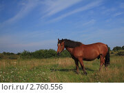 Конь на природе. Стоковое фото, фотограф Виктор Зандер / Фотобанк Лори
