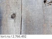Купить «Текстура древесины», фото № 2766492, снято 31 августа 2011 г. (c) Алексей Букреев / Фотобанк Лори