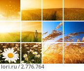 Купить «Высокая трава на фоне неба, коллаж», фото № 2776764, снято 15 июля 2008 г. (c) Iakov Kalinin / Фотобанк Лори