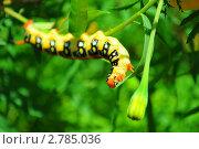 Крупная гусеница. Стоковое фото, фотограф Алёна Новожилова / Фотобанк Лори