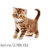 Купить «Рыжий котенок», фото № 2789152, снято 17 июля 2018 г. (c) Дмитрий Калиновский / Фотобанк Лори