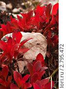 Купить «Белый камень в обрамлении арктоуса», фото № 2795472, снято 1 сентября 2011 г. (c) Sergey / Фотобанк Лори