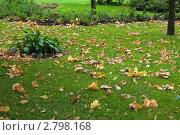 Купить «Осень, опавшие желтые листья на зеленой траве», фото № 2798168, снято 15 сентября 2011 г. (c) Dmitry S. Marshavin / Фотобанк Лори