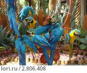 Попугайчики из Таиланда. Тропический сад Ногнуч. Стоковое фото, фотограф Баландина Эльвира Альбертовна / Фотобанк Лори