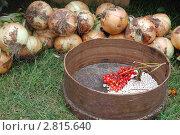 Купить «Натюрморт», фото № 2815640, снято 24 августа 2011 г. (c) Елена Гордеева / Фотобанк Лори