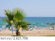Пляж посёлка Текирово. Стоковое фото, фотограф Ольга Першина / Фотобанк Лори
