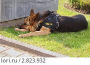 Купить «Уставший полицейский», фото № 2823932, снято 24 сентября 2011 г. (c) Рожков Юрий / Фотобанк Лори