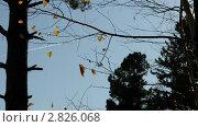 Купить «Самолёт над осенним лесом», видеоролик № 2826068, снято 28 сентября 2011 г. (c) Частоколенко Борис Леонтьевич / Фотобанк Лори