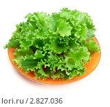 Купить «Листья зеленого салата на тарелке», фото № 2827036, снято 24 сентября 2011 г. (c) Руслан Кудрин / Фотобанк Лори