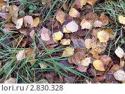Сухие листья на траве. Стоковое фото, фотограф Нелинов Сергей / Фотобанк Лори