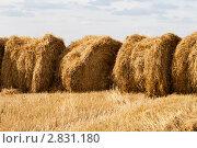 Несколько стогов сена. Стоковое фото, фотограф Юлия Петрова / Фотобанк Лори