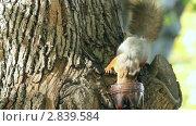 Купить «Белка у кормушки», видеоролик № 2839584, снято 3 октября 2011 г. (c) Сергей Лаврентьев / Фотобанк Лори