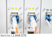 Купить «Оптические кабели подключенные к портам телекоммуникационного оборудования», фото № 2844576, снято 11 июля 2019 г. (c) Антон Железняков / Фотобанк Лори