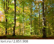 Купить «Осенний буковый лес», фото № 2851908, снято 14 октября 2010 г. (c) Юрий Брыкайло / Фотобанк Лори