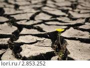 Купить «Растрескавшаяся земля», фото № 2853252, снято 9 мая 2010 г. (c) Светлана Полушкина / Фотобанк Лори