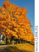 Золотые краски осени. Стоковое фото, фотограф Екатерина Рыжова / Фотобанк Лори