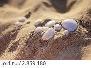Ракушки в песке. Стоковое фото, фотограф Elina Khvan / Фотобанк Лори