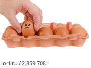 Купить «Рука достает куриное яйцо из лотка», фото № 2859708, снято 1 октября 2011 г. (c) Алексей Сергеев / Фотобанк Лори
